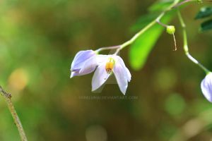 Purple Flower by Seralunai