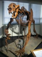 Short-Faced Bear by Sanluris