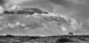 A Kgalagadi Storm by LinRuPhotography