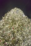 Boston's Faneuile Hall Tree Lighting by Miss-Tbones