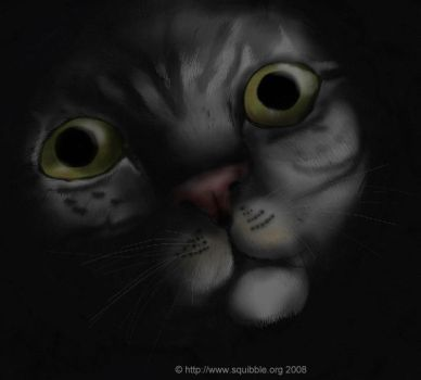 My Cat. by squibble