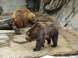 Brown Bear and Grizzly Bear by Feantalia