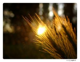 Fading Light by cubemb