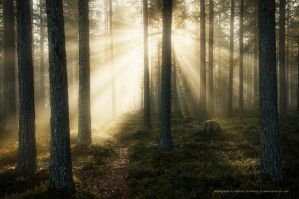 Misty Forest by Stridsberg