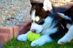 I haz ball by ZabbyTabby