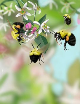 Lemon trees and bumble bees by Psithyrus