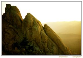 Joshua Tree by GeraldWinslow