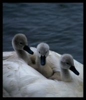 We Three by photonig