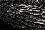 Dark Log by JoseAvilaPhotography