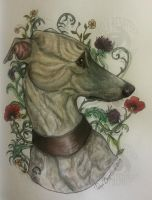 Portrait of a Whippet by RaggedVixen