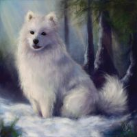 Samoyed Boris by Magicade