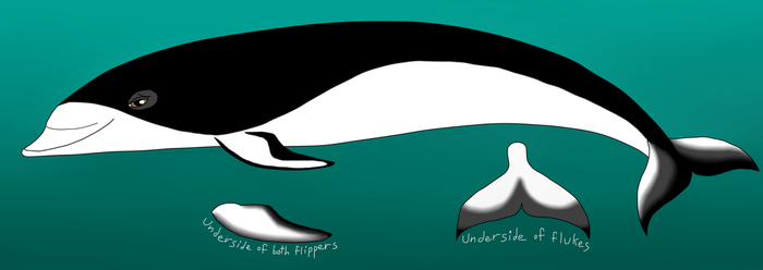 southern right whale dolphin OC by Potoo-Foolery