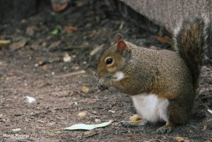 Squirrel 11 by thatmikeguy91