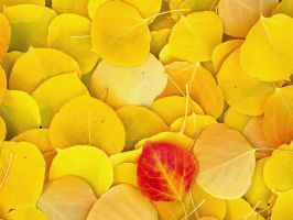Yellows Red by ZEROsilencer