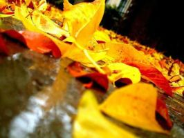 Fallen Leaves by kcborja24