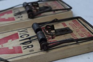 Mouse Trap by photoobsess