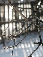 Melting winter by Evelin8