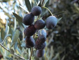 Black Olives by Romydb