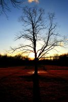 Tree at sunset by Keith-D