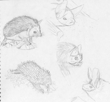 Animal sketches by illogictree