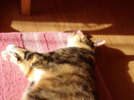 Lazy Annie on my rug :2 by cali-cat