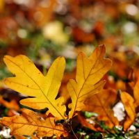 colours of autumn XII by Wilithin