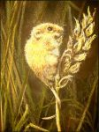 The Doormouse - pastel by Lynne-Abley-Burton