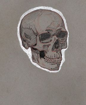 Skull on Toned Paper by SeaQuenchal