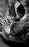 my cat VIII by thehomeboy