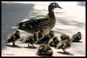 A Very Duckie Family by shutterbugmom