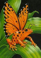 Orange Poison Fairy Frog by TabLynn