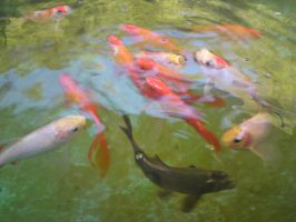 Fishes in motion by SomethingWild7
