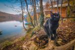 Cat rules by Neshom