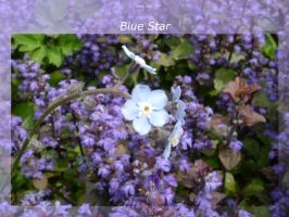 Blue Star by isays
