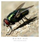 Hairy Fly by cezars