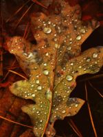 Drops on leaf by Banjis