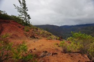 Kauai Red Bluff Stock by Schwartze