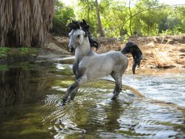 Breyer Horse Water 001 by StormyDragonRider