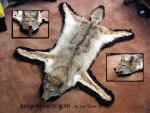 Coyote Rug - Taxidermy by Zhon