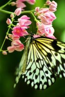 Beautiful Butterfly by MicWits101