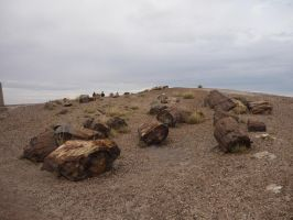 Trips to Petrified Forest NP 27 by Sting-raptor