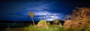 Night Under African Skies by noelholland