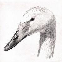Swan Pencils by merage