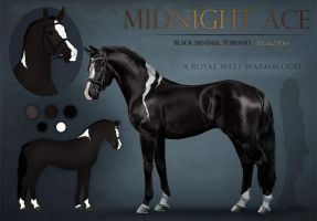 AS Midnight Ace - SOLD by Argentievetri