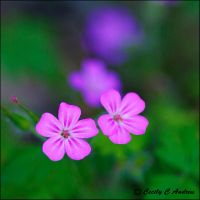 Pair of Pink by CecilyAndreuArtwork