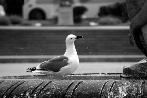 Seagull in a Fountain by Alex-Gibson