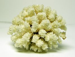 Coral Stock26 by D-is-for-Duck