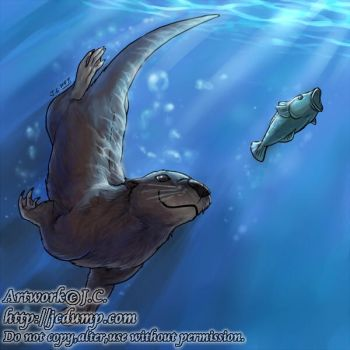 Swimming otter by J-C