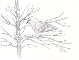Bluebird Sketch by sallygilroy