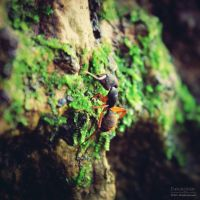Red Ant by Dmaghar